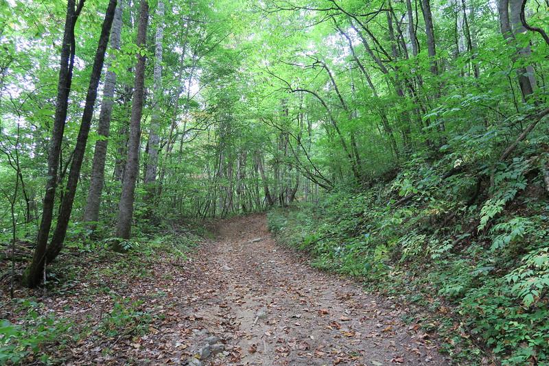 Rough Butt Creek Falls Trail
