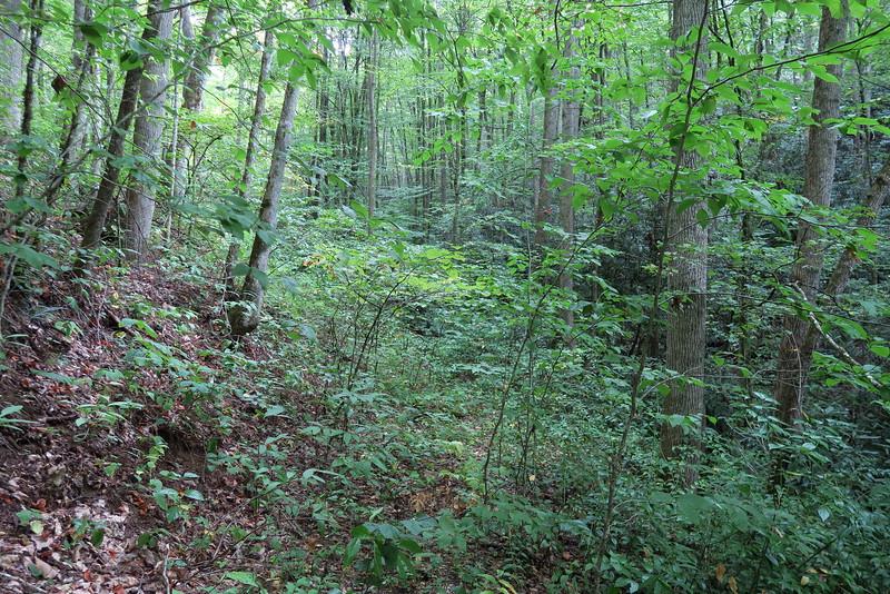 Sugar Creek Trail