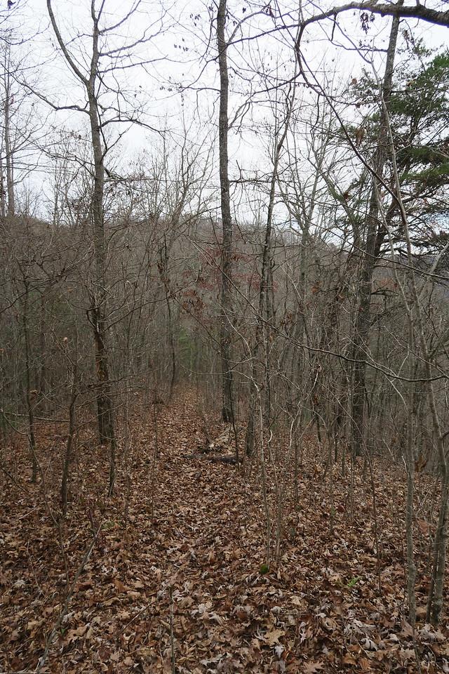 Cedar Cliff Mountain Trail - 3,100'