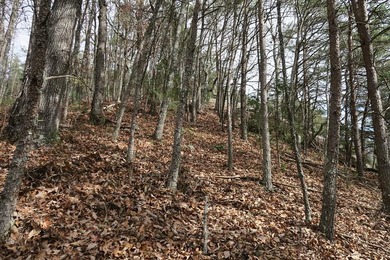 Cedar Cliff Bushwhack - 3,300'
