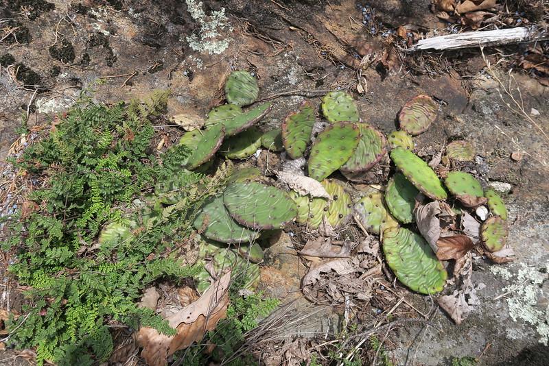 Cactus?!?!
