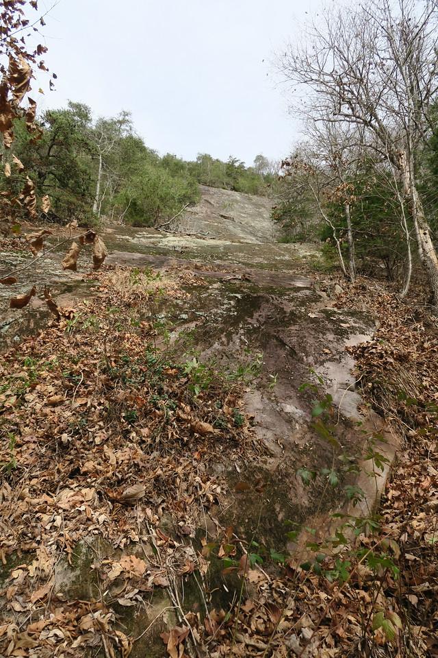 Cedar Cliff Bushwhack - 2,600'