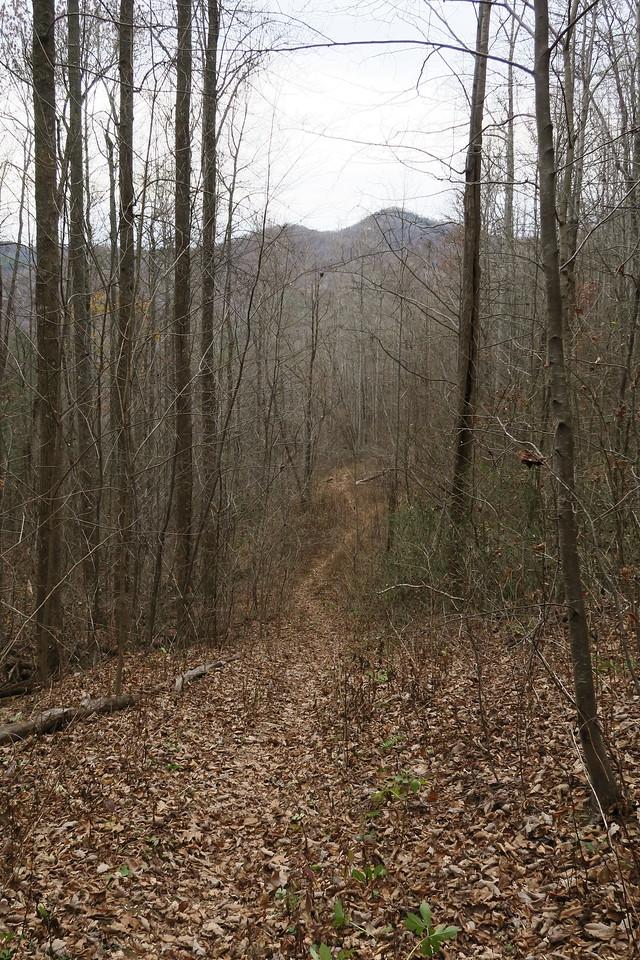 Cedar Cliff Mountain Trail - 2,800'