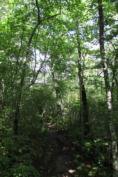 Chinquapin Mountain Trail
