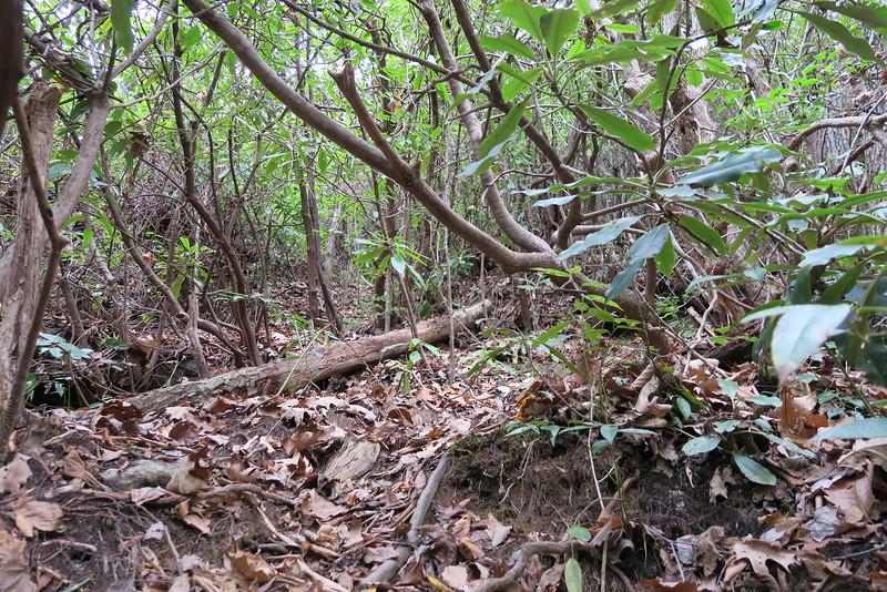 Dismal Falls Trail - 3,520'