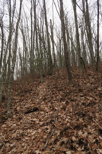 Dismal Falls Trail - 3,300'