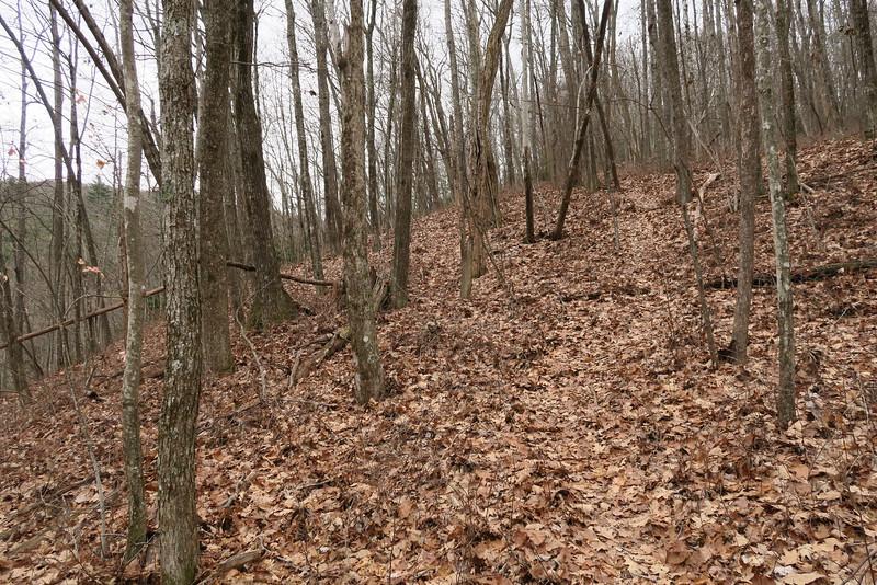 Dismal Falls Trail - 3,400'