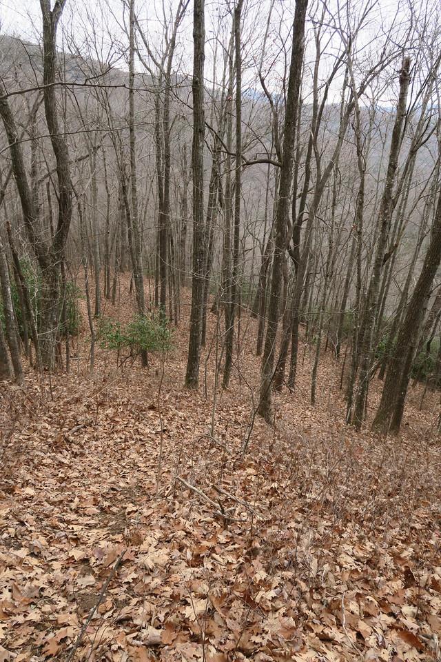 Dismal Falls Trail - 3,500'