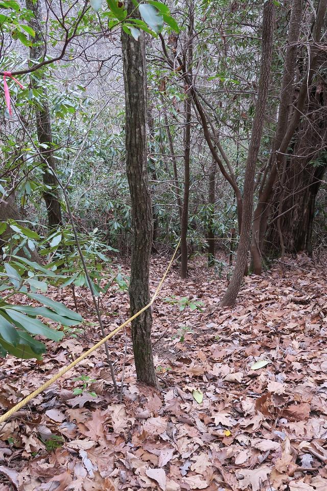 Dismal Falls Trail - 3,550'