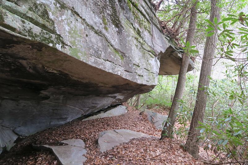 Dismal Falls Trail - 3,120'