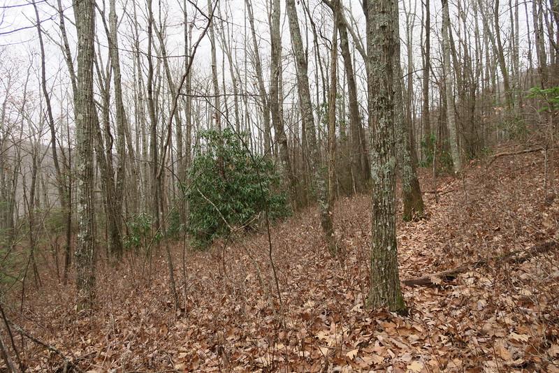 Dismal Falls Trail - 3,240'