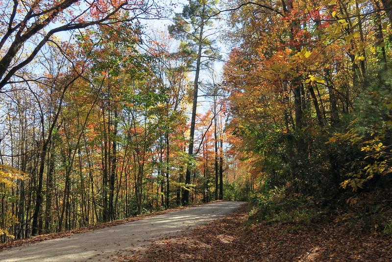 Whiteside Cove Road Trailhead
