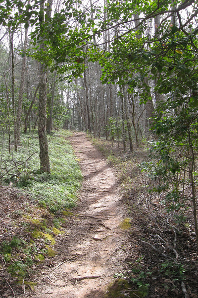 Jackrabbit Mountain Loop 'A' Trail
