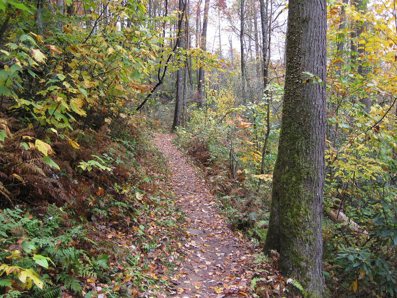 Joyce Kilmer Memorial Loop Trail