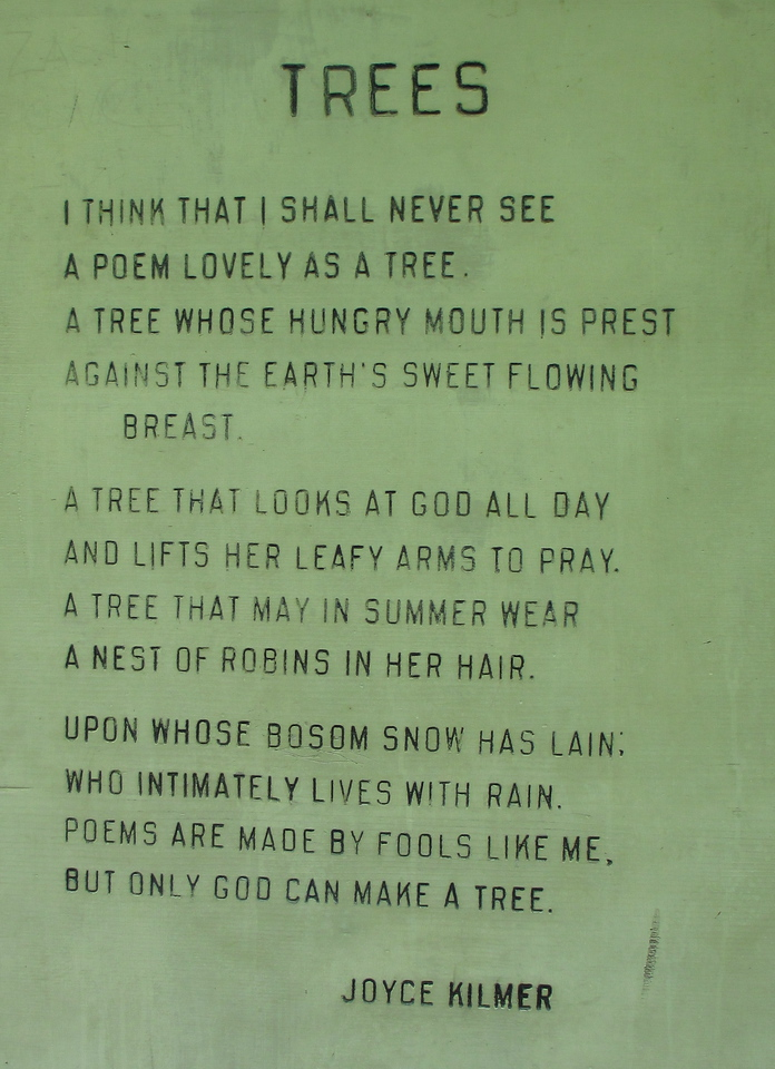 "<I>""I think that I shall never see a poem as lovely as a tree...</I>"
