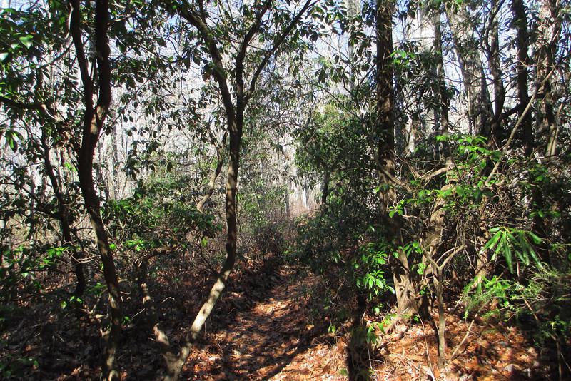 Mac's Gap Trail
