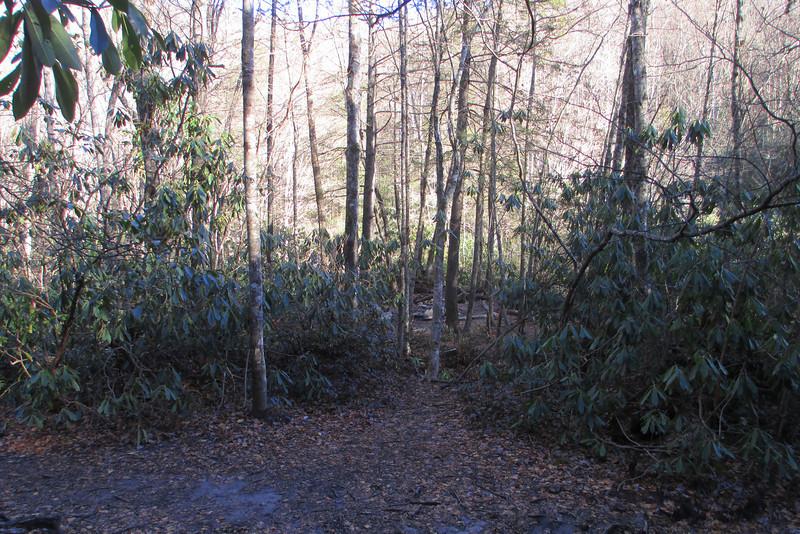 Little Green Trail