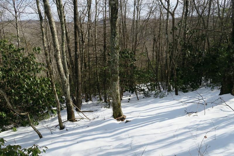 Little Green Mountain Bushwhack