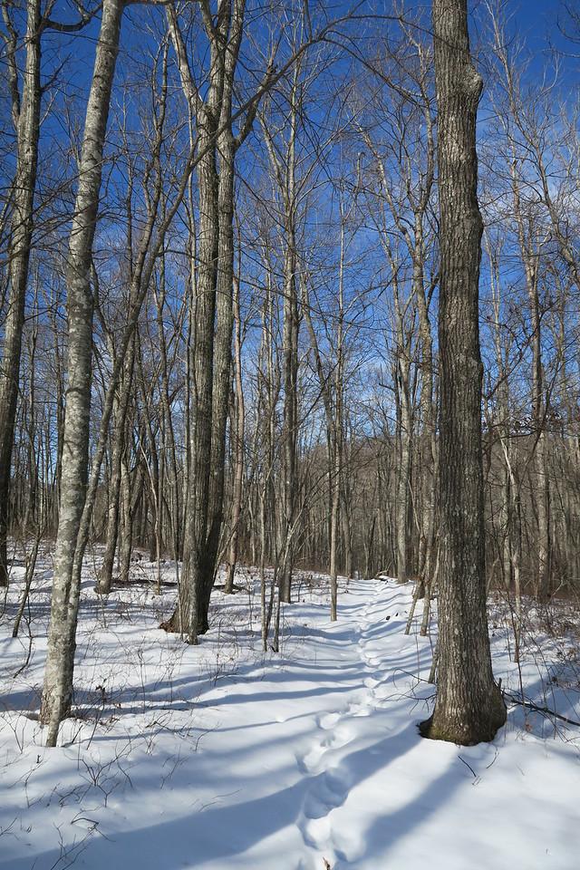 Schoolhouse Falls Trail