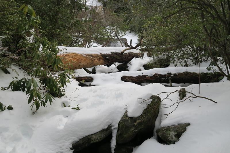 Greenland Creek Trail