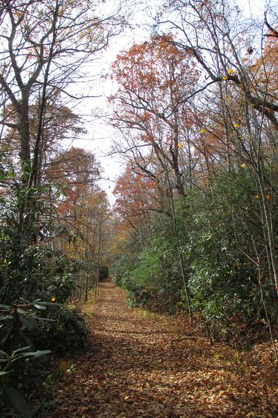 Panthertown Valley Trail - 3,980'