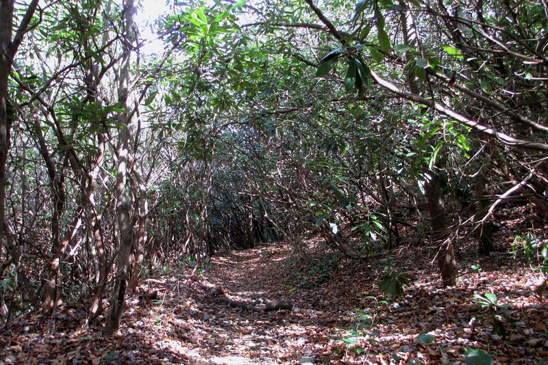Granny Burrell Falls Trail - 3680'