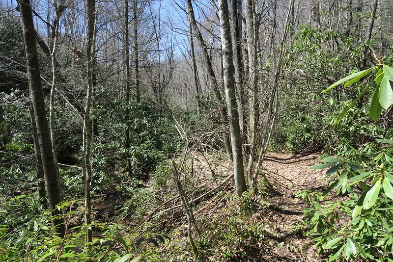 Little Green Creek Trail - 3,920'