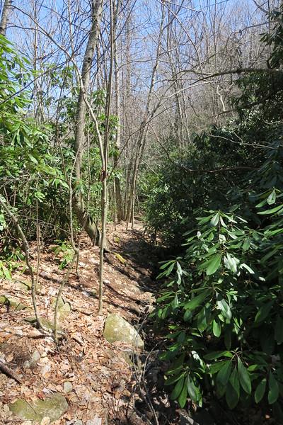 High Bethel Trail - 4,250'