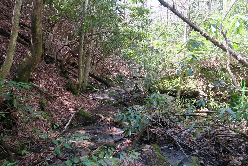 Little Green Creek Trail - 3,660'