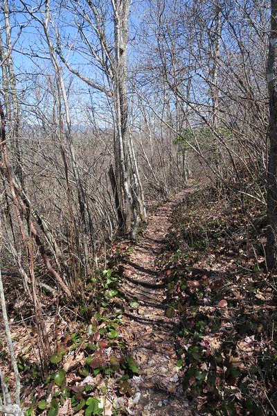 High Bethel Trail - 4,450'
