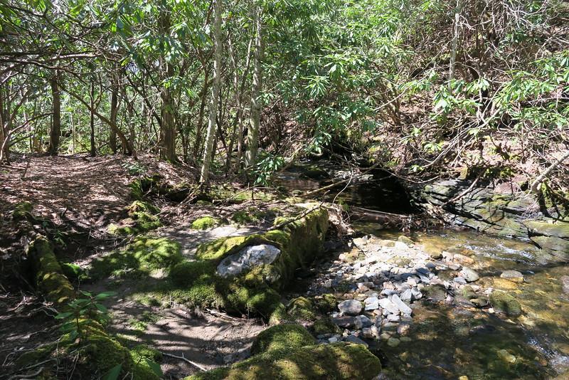 Little Green Creek Trail - 3,800'