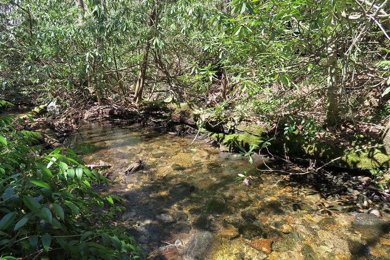Little Green Creek Trail - 3,750'