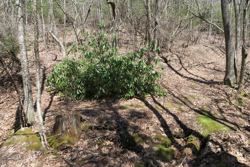 Shelton Pisgah-High Bethel-Little Green Creek Trail Junction - 4,160'