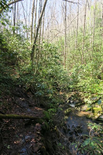 Little Green Creek Trail - 3,680'