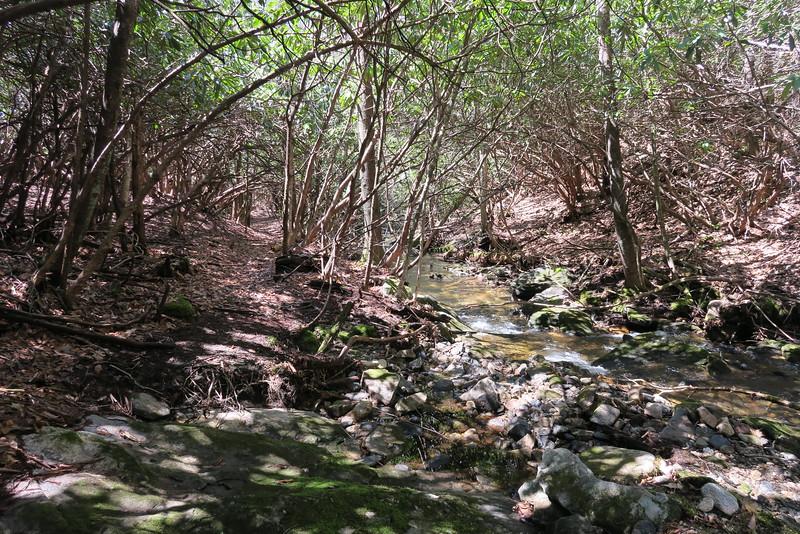 Little Green Creek Trail - 3,640'