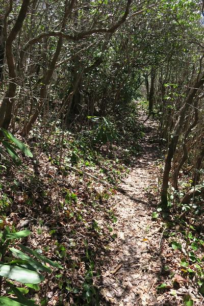 High Bethel Trail - 4,440'