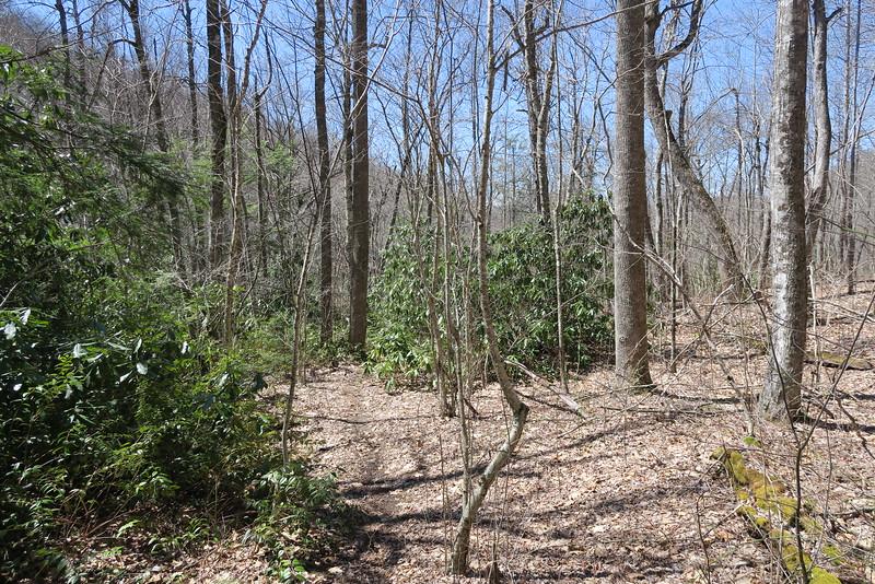 Little Green Creek Trail - 3,950'