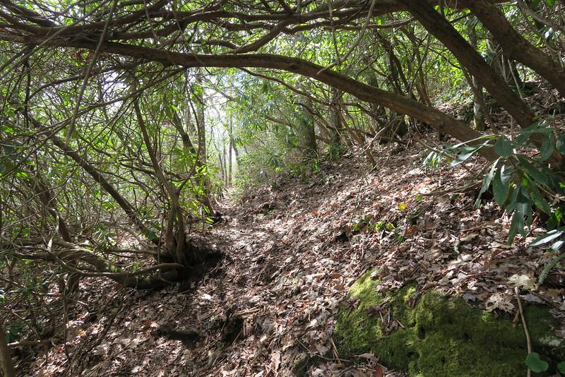 Laurel Knob Trail - 3,950'