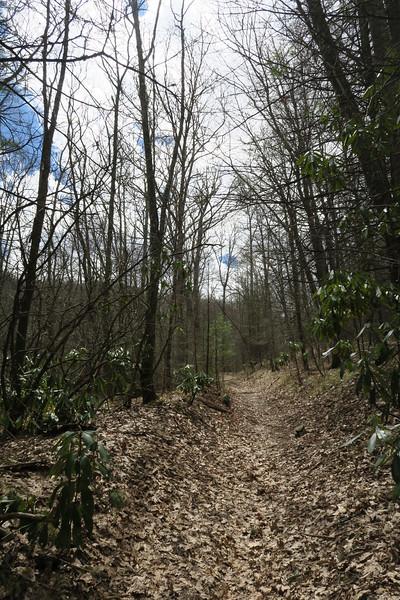 Deep Gap Trail - 3,750'