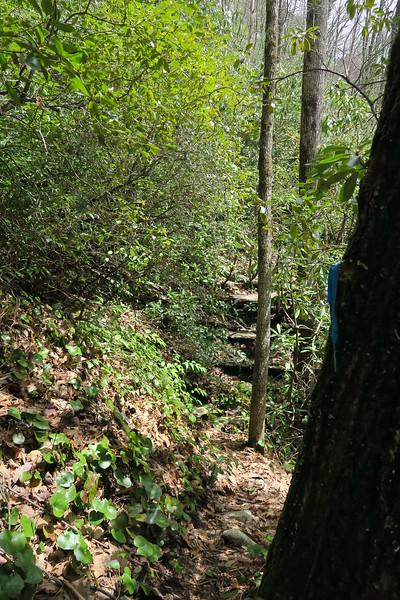 Laurel Knob Trail - 3,700'