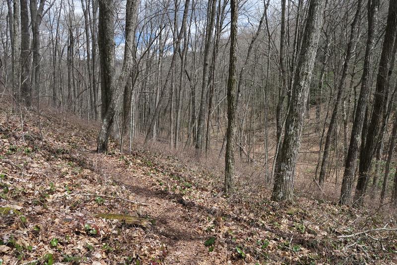 Laurel Knob Trail - 3,890'