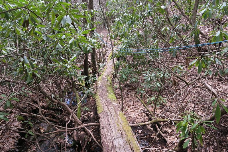 Laurel Knob Trail - 3,910'