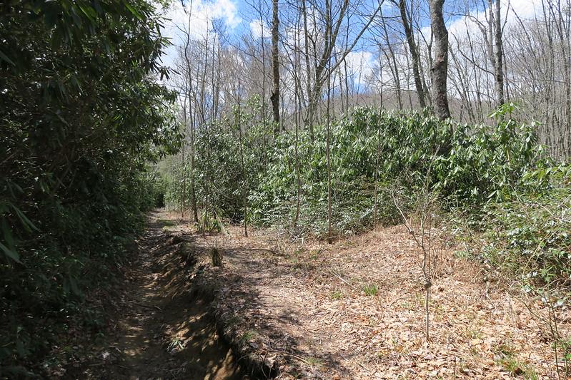 Deep Gap Trail - 3,720'