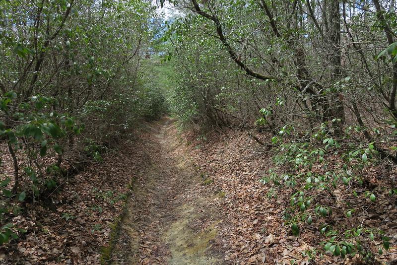 Deep Gap Trail - 3,760'