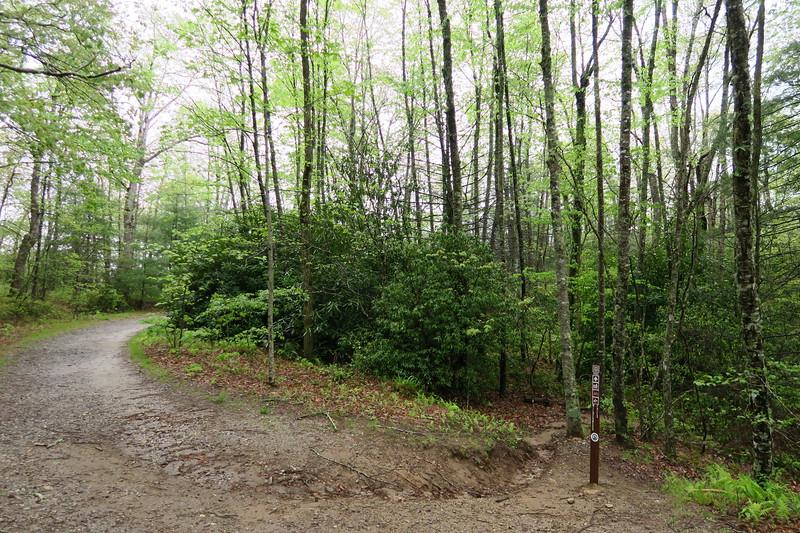 Panthertown Valley-Wilderness Falls Trail Junction