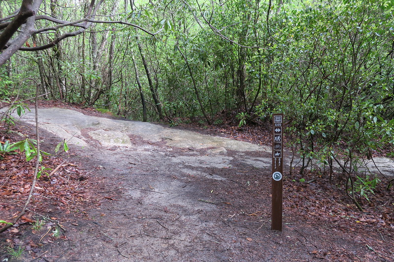 Wilderness Falls-Deep Gap Trail Junction