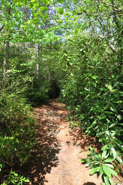 Granny Burrell Falls Trail