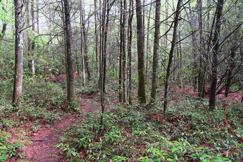Wilderness Falls Trail