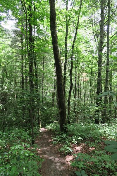 Paradise Falls Trail