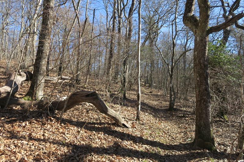 Appalachian Trail -- 4,900'